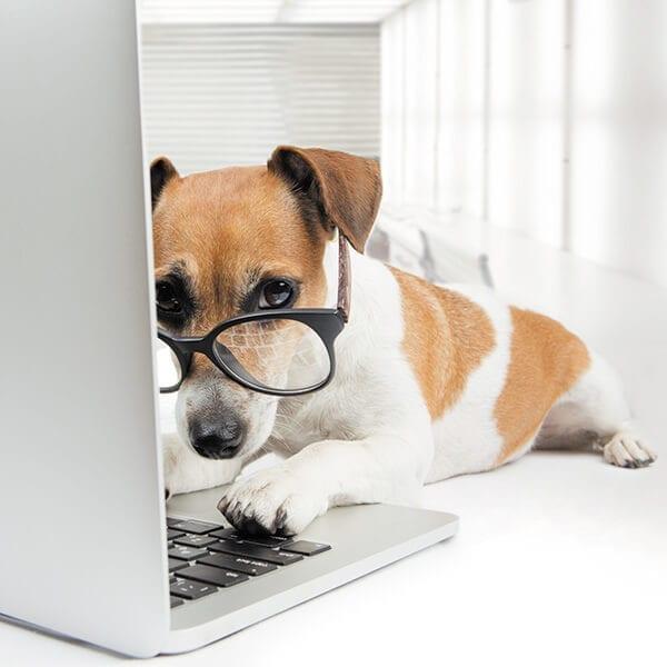 dog on website