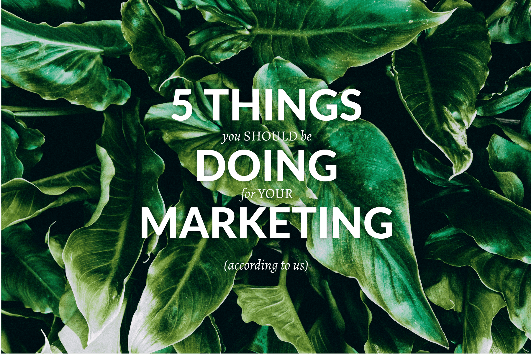 5 Things You Should Be Doing For Your Marketing Nettl Com