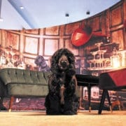 dog in front of exhibition stand