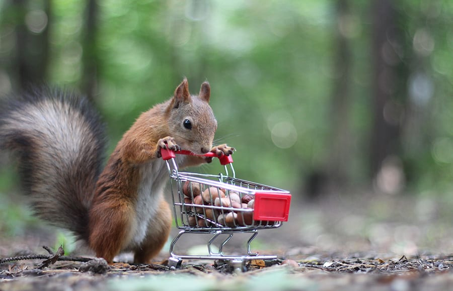 squirrel shopping cart
