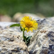 flower in rocks to show business persistence