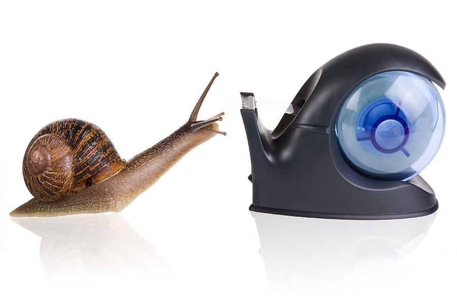 snail finds attractive design