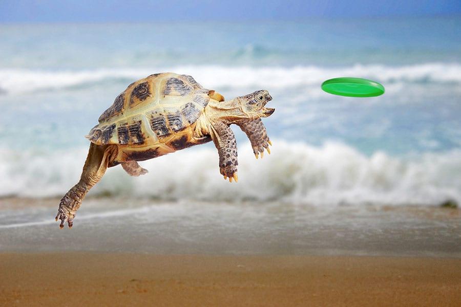 tortoise 900