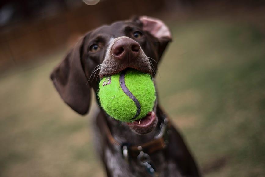 dog-green-ball-900