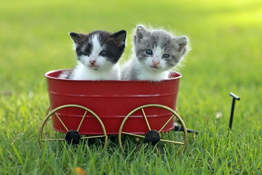 cats-companionship-900