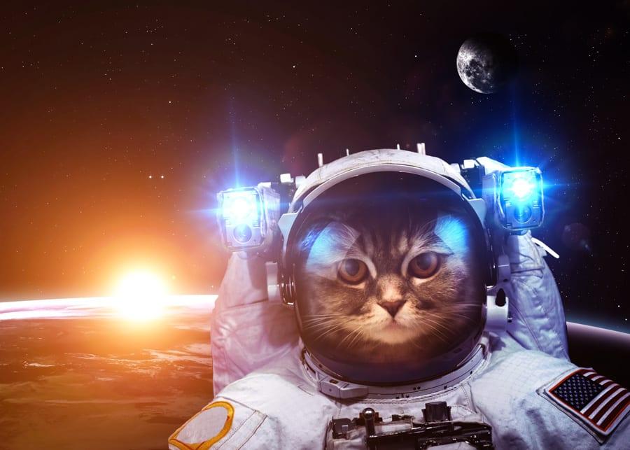 Cat in space uniform