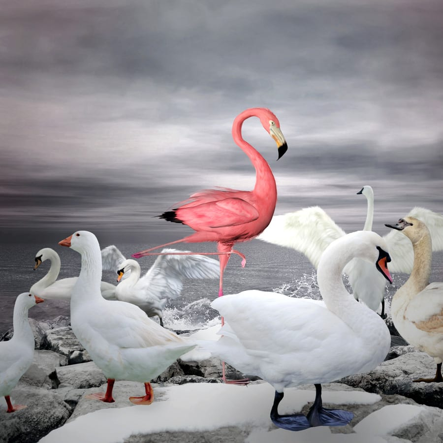 Scheme markup to highlight content and stand out in search resultslike a flamingo