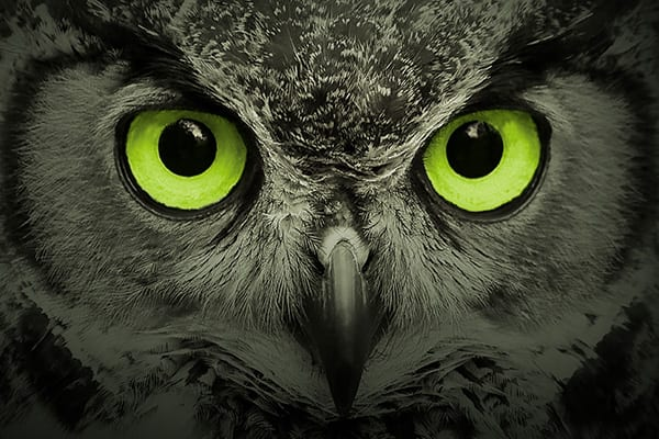 gdpr owl
